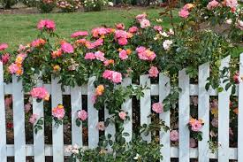 Garden Fence Types - best fence types for gardens lc fence