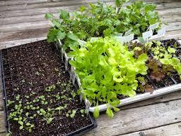 89 best the year round vegetable gardener images on pinterest