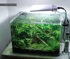Tank Aquascape 49 Best Dennerle Scapers Tank Images On Pinterest Vivarium