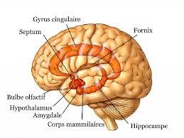 si e des motions dans le cerveau notre cerveau est l une des structures les plus merveilleuses de
