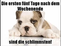 lustige hundesprüche mehr lustige bilder und sprüche auf http lachlos ch der alltag
