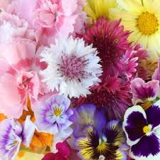 Where To Buy Edible Flowers - the flower deli seasonal edible flowers to buy online