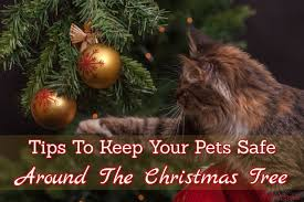 tips to keep your pets safe around the christmas tree infographic