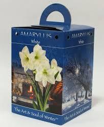 white amaryllis gift box the soul of winter amaryllis gift