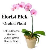 Orchid Plants Orchid Plants Archive Julianne U0027s Floral Designs