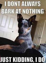 Dog Barking Meme - i dont always bark at nothing dog meme barking f c meme and dog
