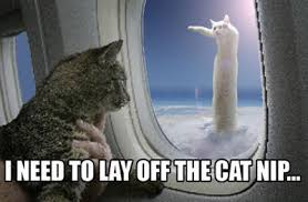 Flying Cat Meme - airplane cat macros