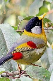 Ontario Backyard Birds Pin By Noemi Bocek On Belleza De La Naturaleza Pinterest Bird