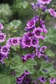 boston u0027s best kept secret eva u0027s organic garden gardenista