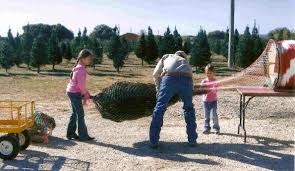 concho christmas tree farm choose and cut