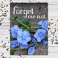 forget me not seed packets the gardener forget me not wildflowers 1 pound