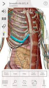 Pictures Of Anatomy Of The Human Body Human Anatomy Atlas Android Apps On Google Play