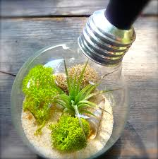 light bulb terrarium extinction craft organic