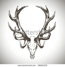 deer skull horns isolated hand drawn stock vector 563439442