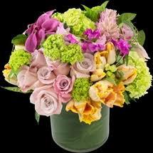 denver florists the twisted tulip denver florists flowers flower