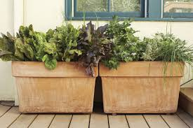 edible container garden ideas gardening mother earth living