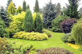 Rock Garden Plants Uk Evergreen Garden Plants Garden Landscape With Variety Of Conifers