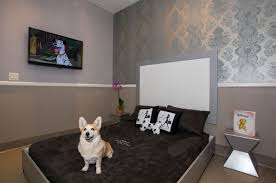 luxury pet hotel welcome to posh pet hotel