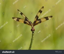 dragon nest halloween background music halloween pennant dragonfly gold brownishblack wings stock photo