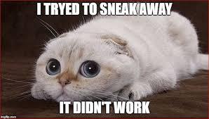 Cute Cat Meme Generator - funny cat meme generator funny pics story