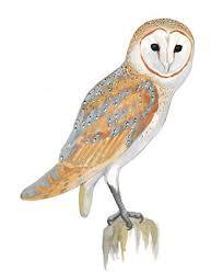 Where Does The Barn Owl Live How Do Barn Owls Fly So Silently Audubon
