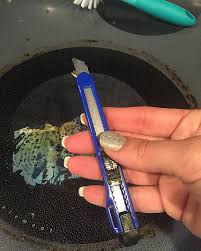 How To Clean A Glass Top Cooktop How To Clean Plastic Off Of A Glass Top Stove U2013 It U0027s A Krazy Life