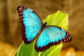interpretation of a in which you saw butterfly