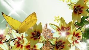 Yellow Lilies Flower Butterfly Summer Flowers Sparkles Bright Gold Yellow Lilies