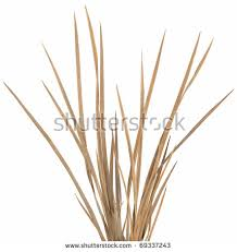 grass stock images royalty free images vectors