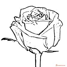 coloring pages of roses free printable black and white pictures