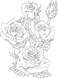 grandiflora prominent bush roses coloring free printable