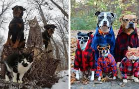 pet photo albums 44 animals that look like they re about to drop the albums