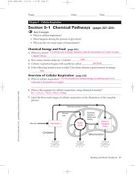 section 9 u20131 chemical pathways holyoke