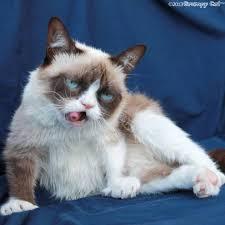 Angry Cat Meme Generator - meme template search imgflip