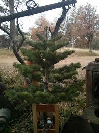 silvertip tree farm