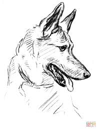 german shepherd dog portrait coloring free printable