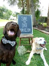 halloween save the date magnets save the date with cats what a great way to use your pets in the