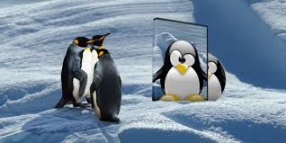 to build your own bootable linux live cd