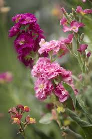 Highly Fragrant Plants 10 Most Fragrant Outdoor Flowers Best Smelling Plants For Garden