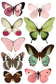 best 25 butterfly images for drawing ideas on pinterest