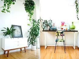 plante de chambre quelle plante pour une chambre plante depolluante pour chambre