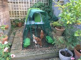 reviews for eglu go up chicken coop chicken keeping omlet