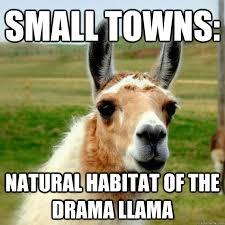 Llama Meme - drama llama meme google search drama llama pinterest meme