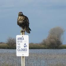 Kern National Wildlife Refuge