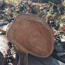 Teak Wood Teak Logs Teakwood Tectona Grandis Buy Teak Logs Teak Wood Teak