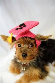 dog graduation cap peachy graduation cap for dogs hot pink knit hats and accessories