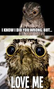 Funny Owl Meme - images of funny owl owls women fan