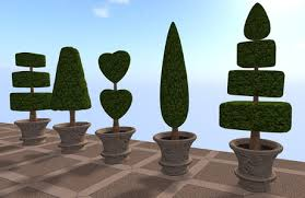 topiary trees second marketplace potted topiary trees topiary trees