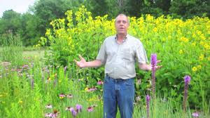 native plants of ontario 4 ways you can help pollinators in your community youtube
