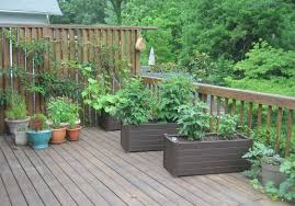 vegetables for containers and up trellises